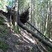 Ganz lokal hat ein Sturm vor ein paar Jahren ein paar Bäume gefällt