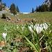 ... und letzte Frühlingsboten - vor dem Sattel