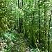 Wieder geheimnisvoller Wald. Hier im Aufstieg auf einen Felsen.