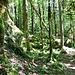 Verwunschener Wald?