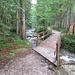 schön im Wald gehts erst mal am Bach entlang