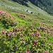 Alpe di Categn