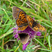 Viele der Blüten waren von Schmetterlingen umkämpft :-D