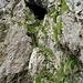 Leiter im Aufstieg zum Niderbauen-Chulm