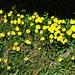 leuchtendes Gelb - vor dunklem Unterstand
