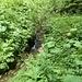 Nun (siehe Text) Schlüsselstelle! Um hier nicht auf einen nach Norden ziehenden Gratast zur Oberen Wallenburgalm (Schweinsbergl) zu geraten, sondern auf dem Südwestgrat weiter zum Klammstein aufzusteigen, gilt hier: den Bach auf der Stelle überqueren und...