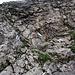 Kurze, mit Kette gesicherte Steilstufe im Aufstieg zum Forstberg