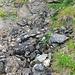 ein paar Steinmännchen zeigen den Wegverlauf an - kurz nach dieser Stelle verliert sich die Wegspur