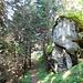 Zunächst steigt man in einigen Kehren durch den Wald bis Meili (2020 m)