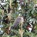 Kolibri an der Tambopaxi Lodge