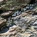 schön angeordnet in einer langen Felsritze ...