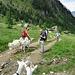 Un gregge di capre inizia a seguirci.
