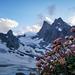 Gletscherhahnenfuss