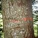 Gleich am ersten Baum auf der linken Seite des Steigleins ist eine etwas verblasste rote Markierung zu erkennen, die sieht man aber erst, wenn man das Steiglein schon entdeckt hat.