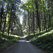Im schattigen Gütschwald