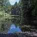 Im Gütschwald gibt es einen Waldsee. Gegenwärtig wegen Wassermangels etwas verschlammt.