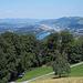Zoom zum Rotsee und Ebikon