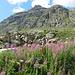 Startpunkt am Parkplatz bei der Alp Güglia - bereits auf über 2200m Höhe<br />(hier war der Hitzetag recht erträglich)