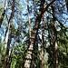 ein eigenartiger Baum