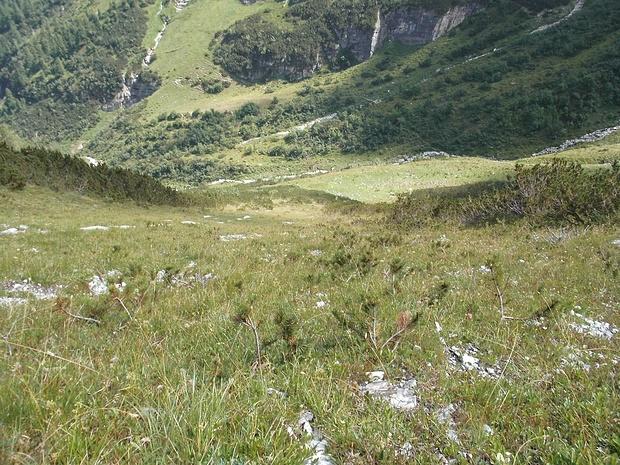 Nach einer einigermaßen zu bewältigenden Passage durch die Latschen steige ich einen steilen Grashang auf.