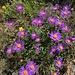 Blumenpracht am Wegrand