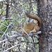 """dieses Eichhörnchen pfiff uns an. Vermutlich war die Aussage """"geht endlich weiter!"""" ..."""