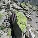 Flechten haben sich auf den Felsbrocken angesiedelt.