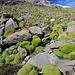Überall diese hübschen und harten grünen Polster.