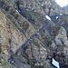 hier geht es zuerst einige Höhenmeter hinunter bevor es gradlinig, auf dem Schotter-Kiesband zwischen den Felsen hinauf geht.