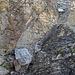 hier geht der Weg wieder hinunter und zwischen Felsblock und Felsen wieder weiter die Geröllrinne hinauf