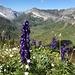 Blumenbegleitung unterwegs 2 - mit Ausblick zu Titlis, Wissberg und Stotzigberg