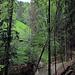 ein offener Wiesenfleck mitten im Wald