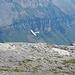 ein Flugzeug fliegt sehr nah an den Bergen vorbei