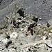 Kletterpassage beim Abstieg