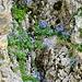 Flora in den Felswänden der Stollen.