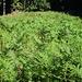 """""""Höch Farlen"""" sieht so aus (aufgelassene Weide, hier hinter dem Hirnibüel)"""