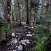 Steiler Weg durch den Wald zum Ochsensitz