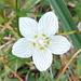 Sehr schöne Flora am Wegrand