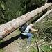 Holzerarbeiten kurz vor Langwies zwingen uns unten und obendurch