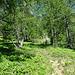 dall'Alpe Paione seguendo per qualche metro il sentiero che porta ai laghi di paione si incrocia sulla sinistra un'altro sentiero meno battuto che porta al dosso