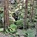 Il muschio in alcuni tratti ricopre completamente le rocce.