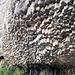 Interesting basalt formations in Garni Canyon