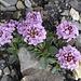 schöne, leuchtende, Blüten im vorherrschenden Grau