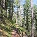 Oberhalb Gasenried stiegen wir durch herrlichen Bergwald auf.