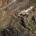 TIefblick vom Biwakplatz auf die Bordierhütte (2886m).