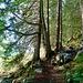 Der Weg durch den Wald nach Zwischenmythen.