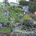 man kann es auch übertreiben - rechts vom Haus standen nochmals so viele im Garten