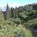 Tourinette in den Büschen bei den Beeren