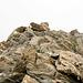 <b>Bild 5.</b> Selber Aufnahmestandort wie Bild 4. Blick zurück beim Abstieg, wenige Meter unterhalb des Gipfels.