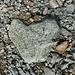 Ein Herz mitten auf dem Bergweg